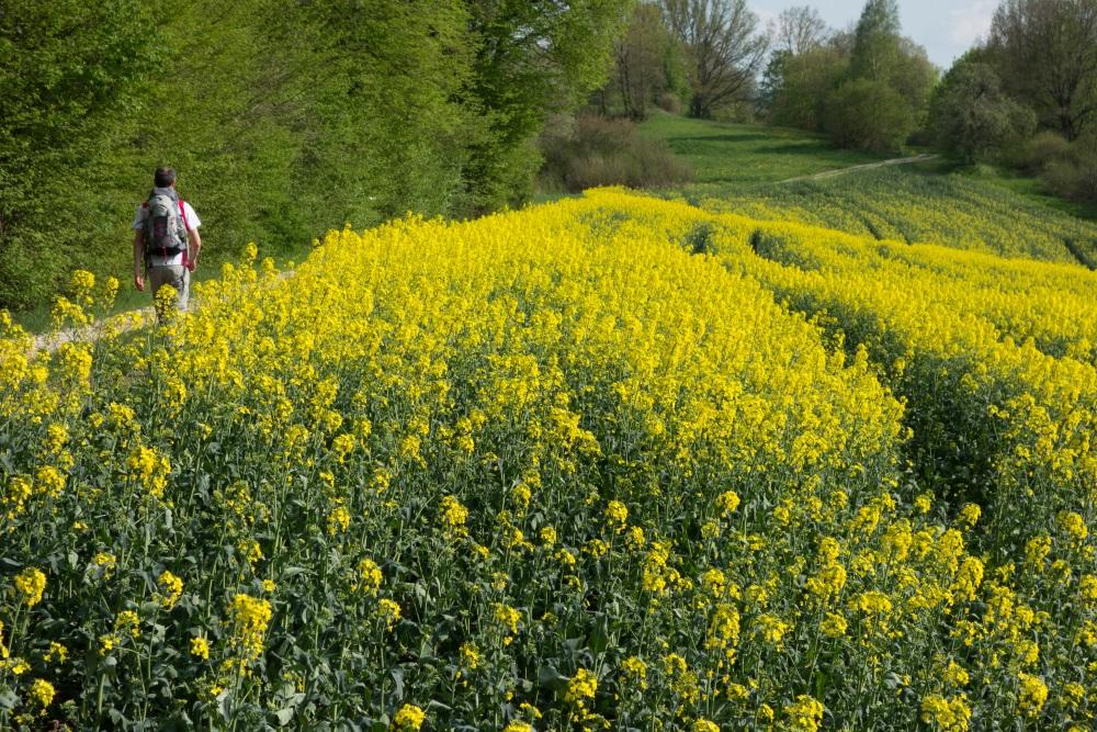 Wandern im Frühling - Auf dem Fränkischen Gebirgsweg