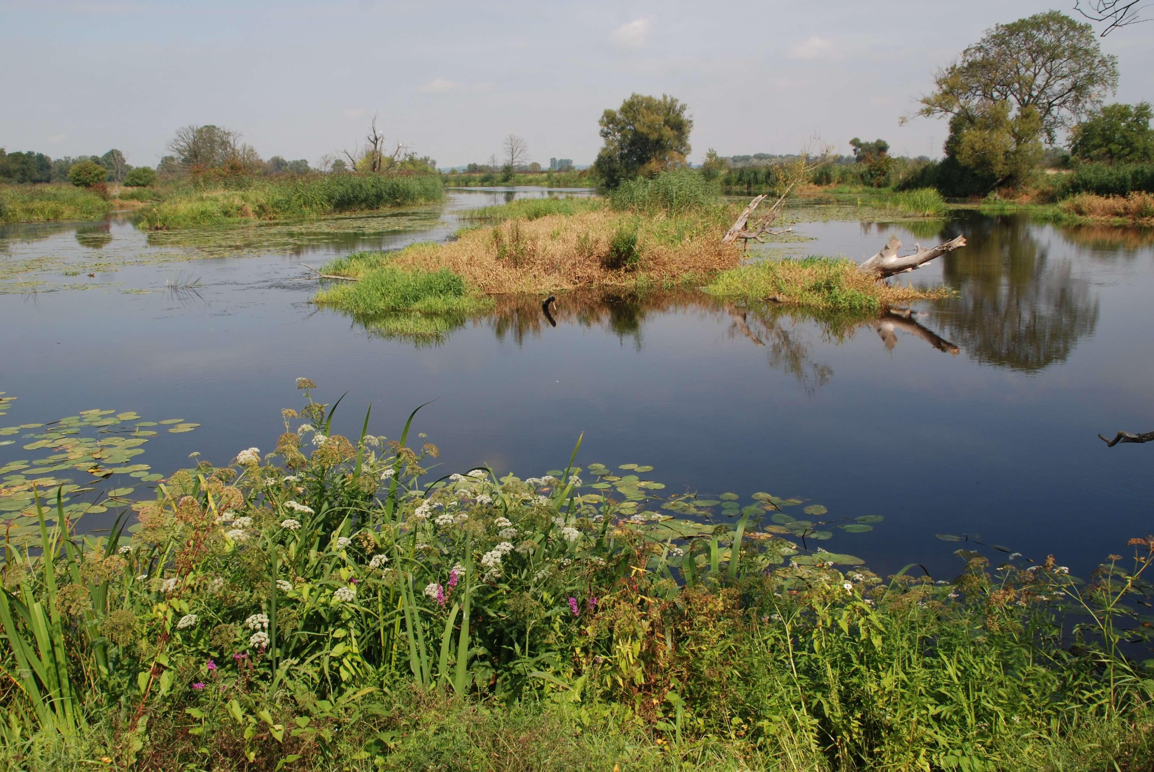 Nationalpark Unteres Odertal - Altwasserarme Oderniederung