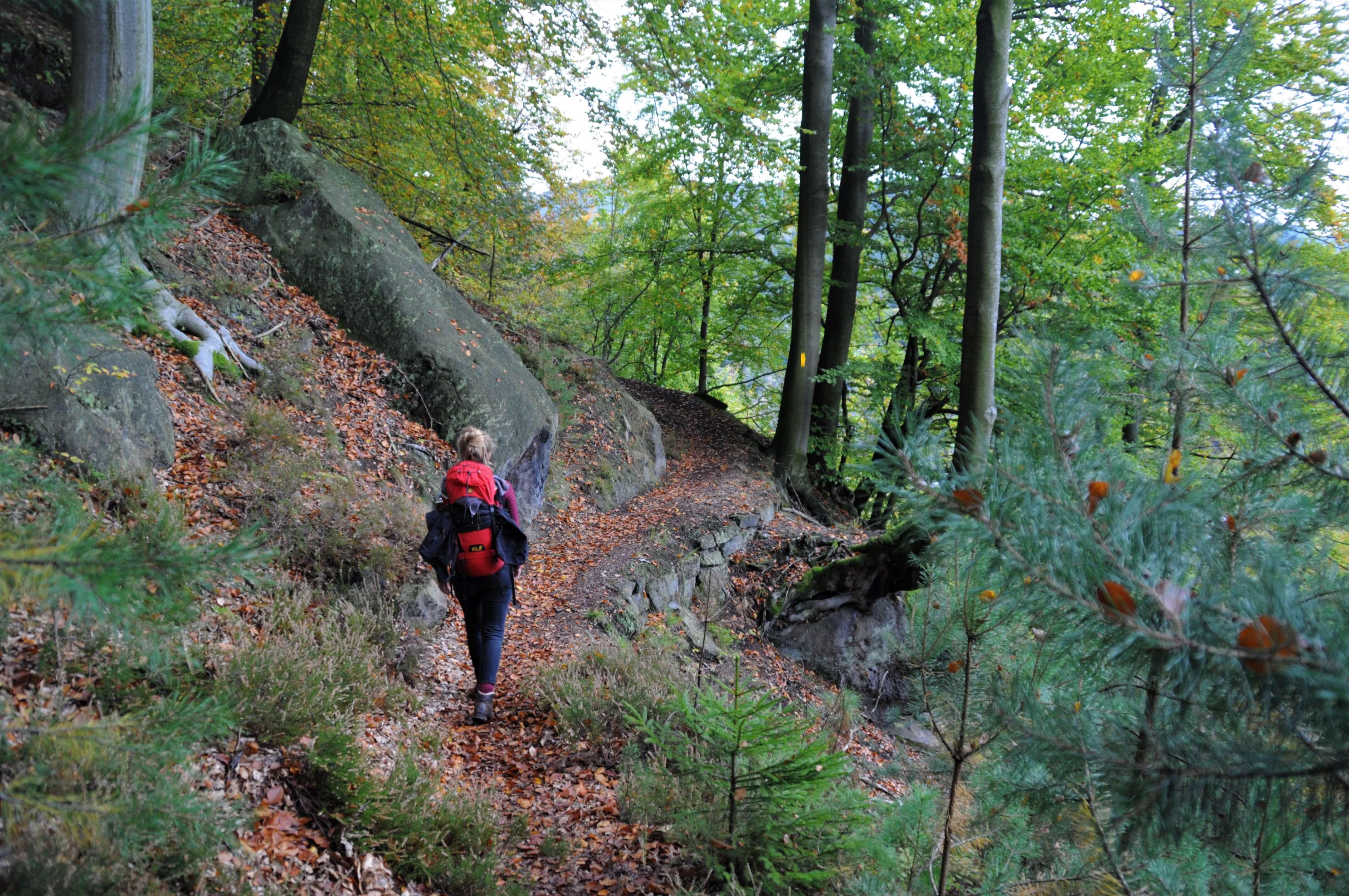 Wandern auf dem Forststeig im Elbsandsteingebirge