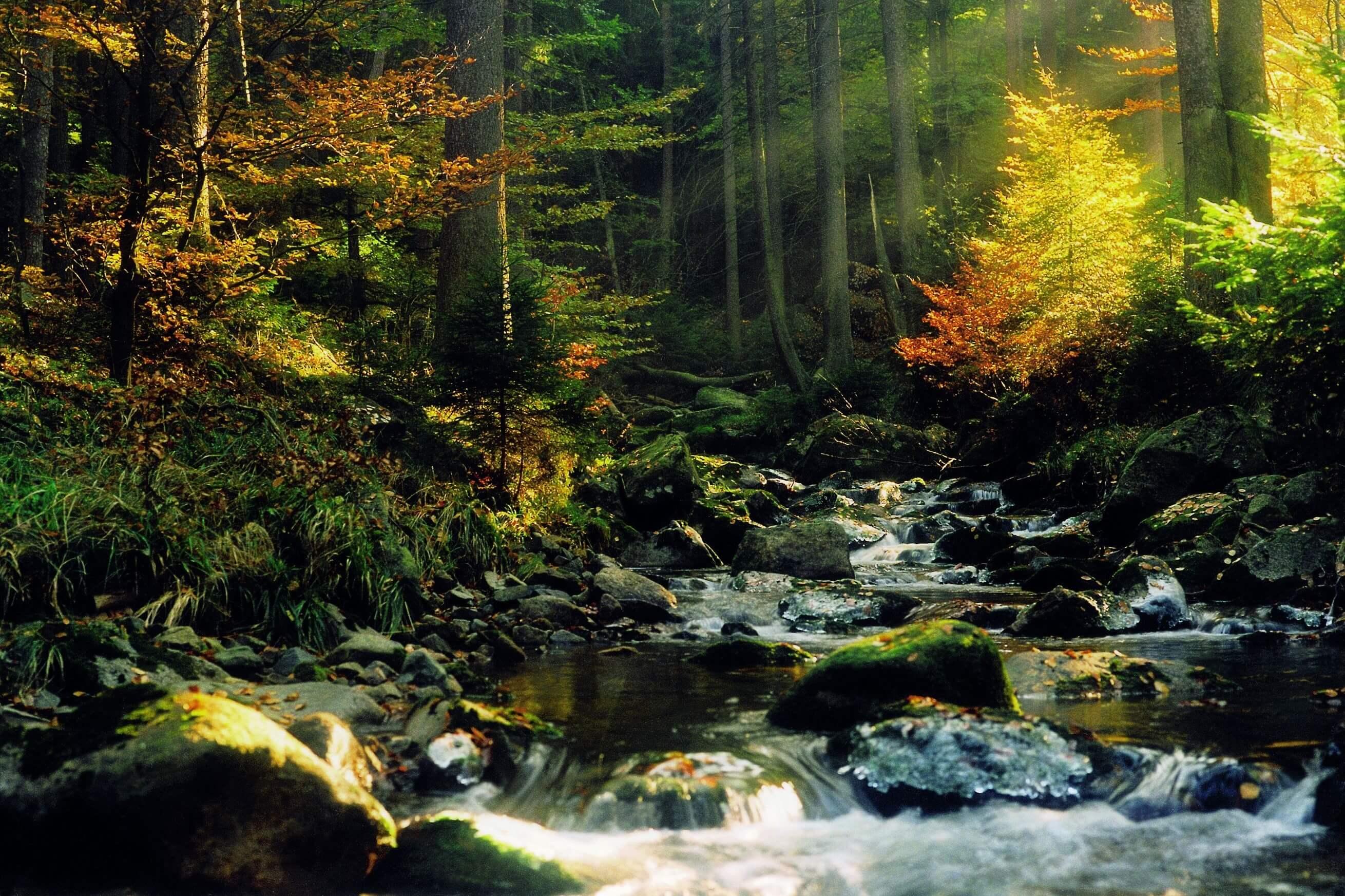 Nationalpark Harz - Fichtenrotbuchenwald im Ilsetal