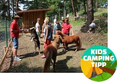 Kids Camping Tipp - Campingpark Buntspecht