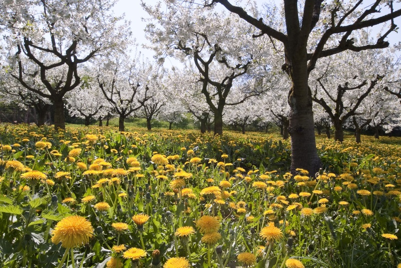 Wandern im Frühling - Auf dem Streuobstwiesenweg
