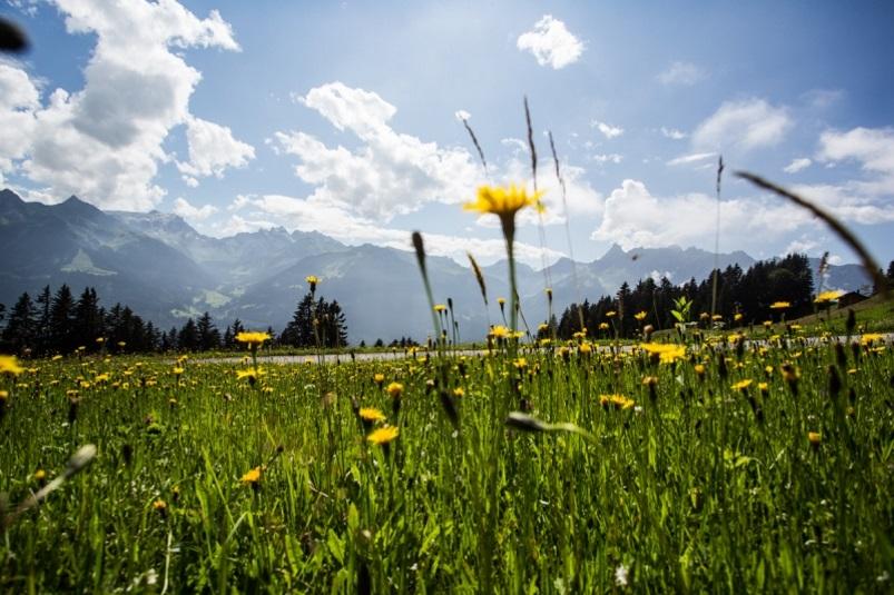 Wandern im Frühling - Blumen- & Kräuterwanderung Valleu Montafon