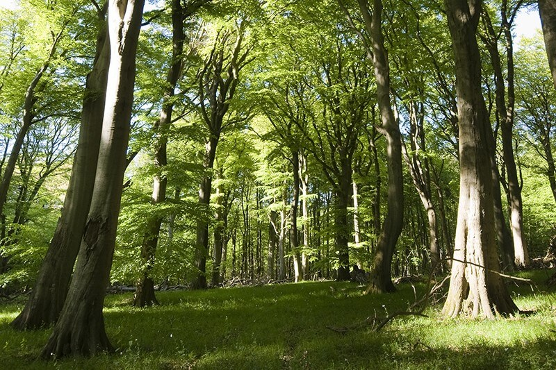 Nationalpark Jasmund - Buchenwald UNESCO Weltnaturerbe