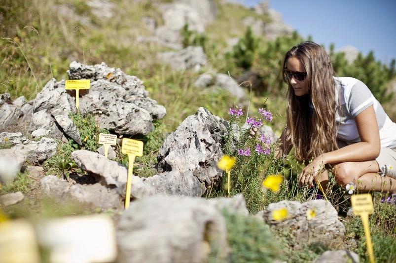 Wandern im Frühling - Alpenblumenweg in Kitzbühel