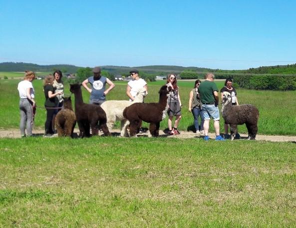 Mini-Abenteuer - Wandern mit Alpakas