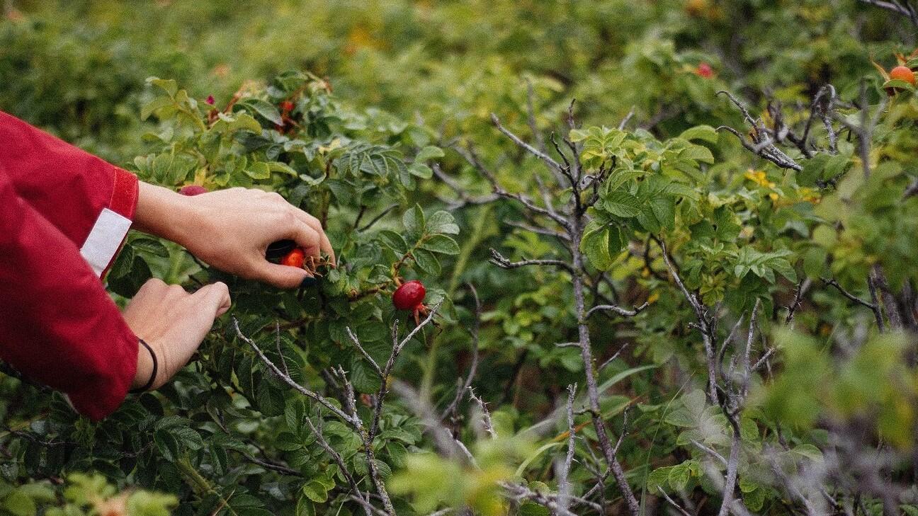 Herbstwanderung mal anders – mit Wandersnacks zum selber pflücken