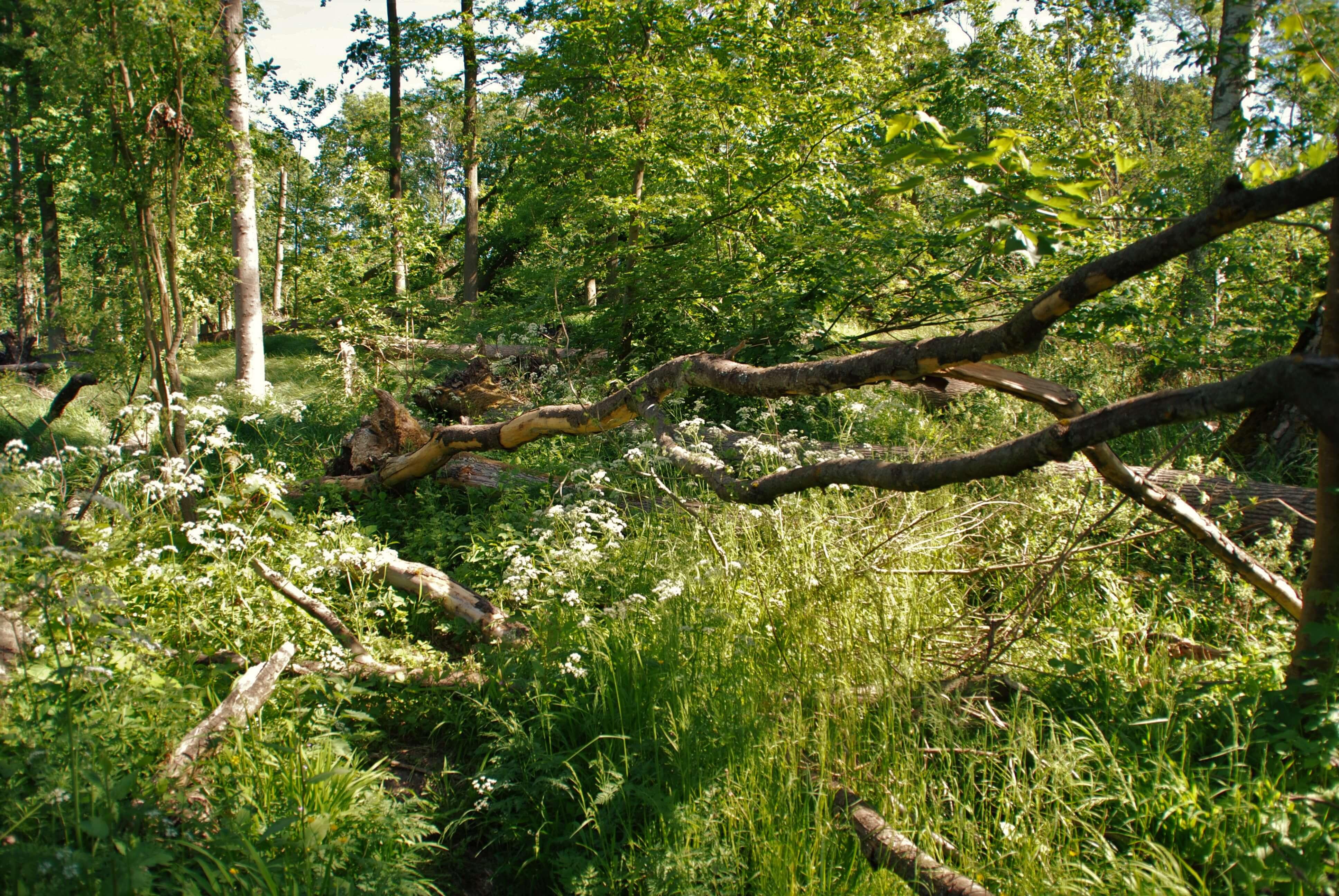 Nationalpark Unteres Odertal - Weg der Auenblicke