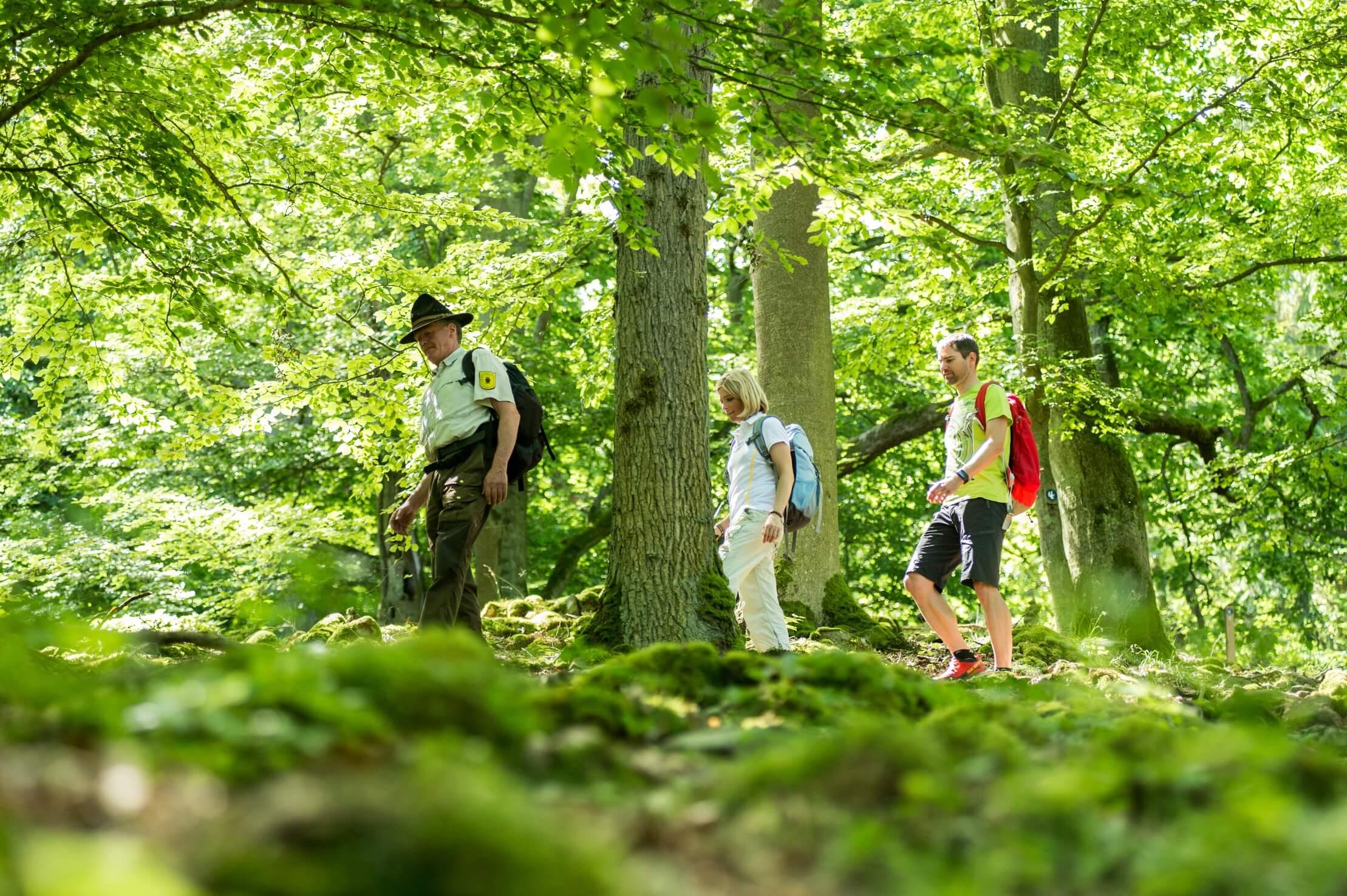 Nationalpark Kellerwald-Edersee - Wandern mit einem Ranger
