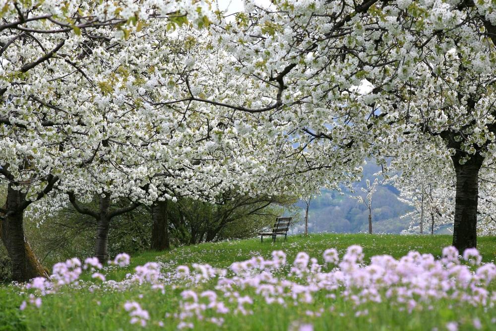 Wandern im Frühling - Dreifürstensteig auf der Schwäbischen Alb