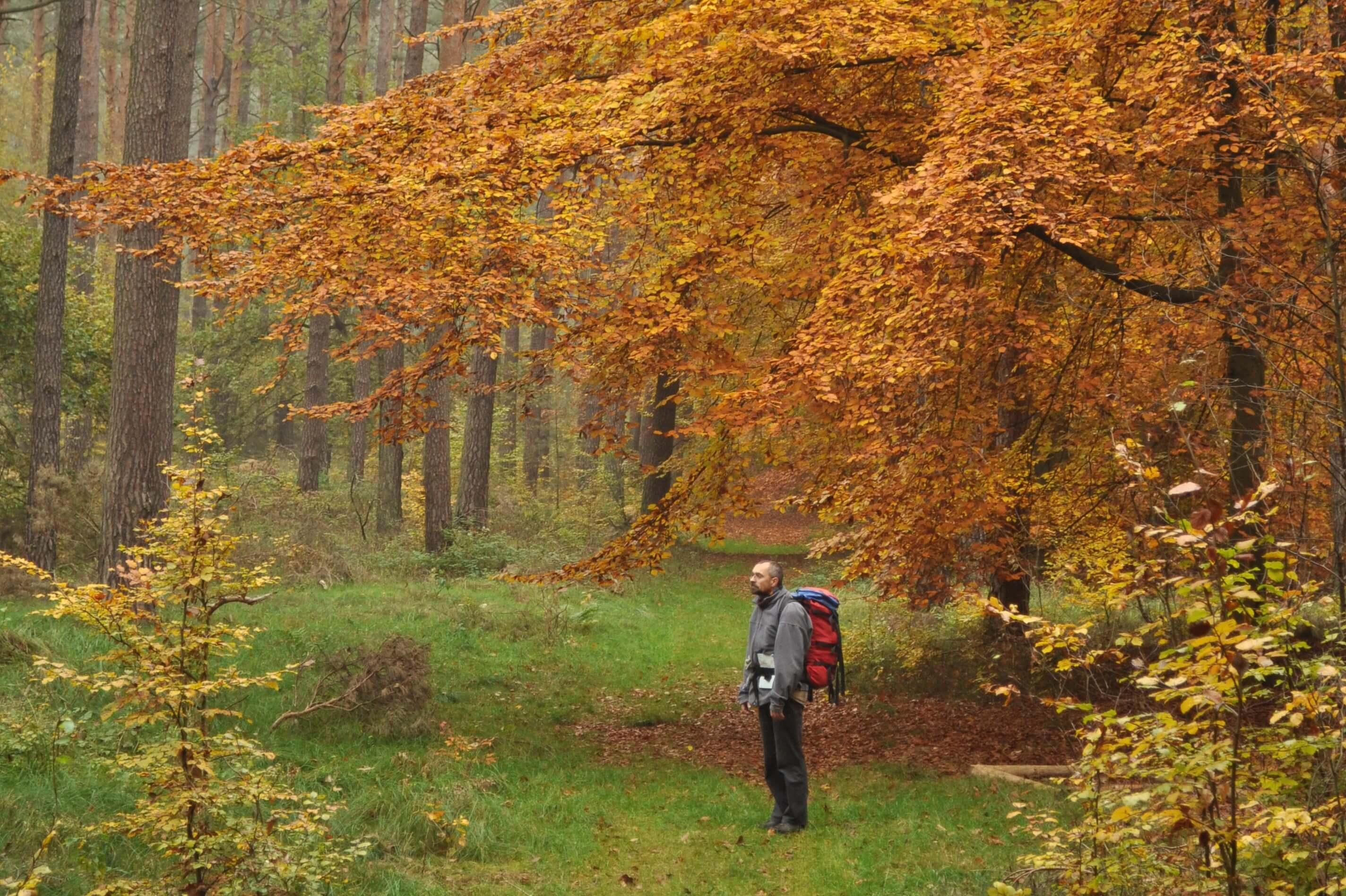 Nationalpark Müritz - Rundweg bei Zwenzow