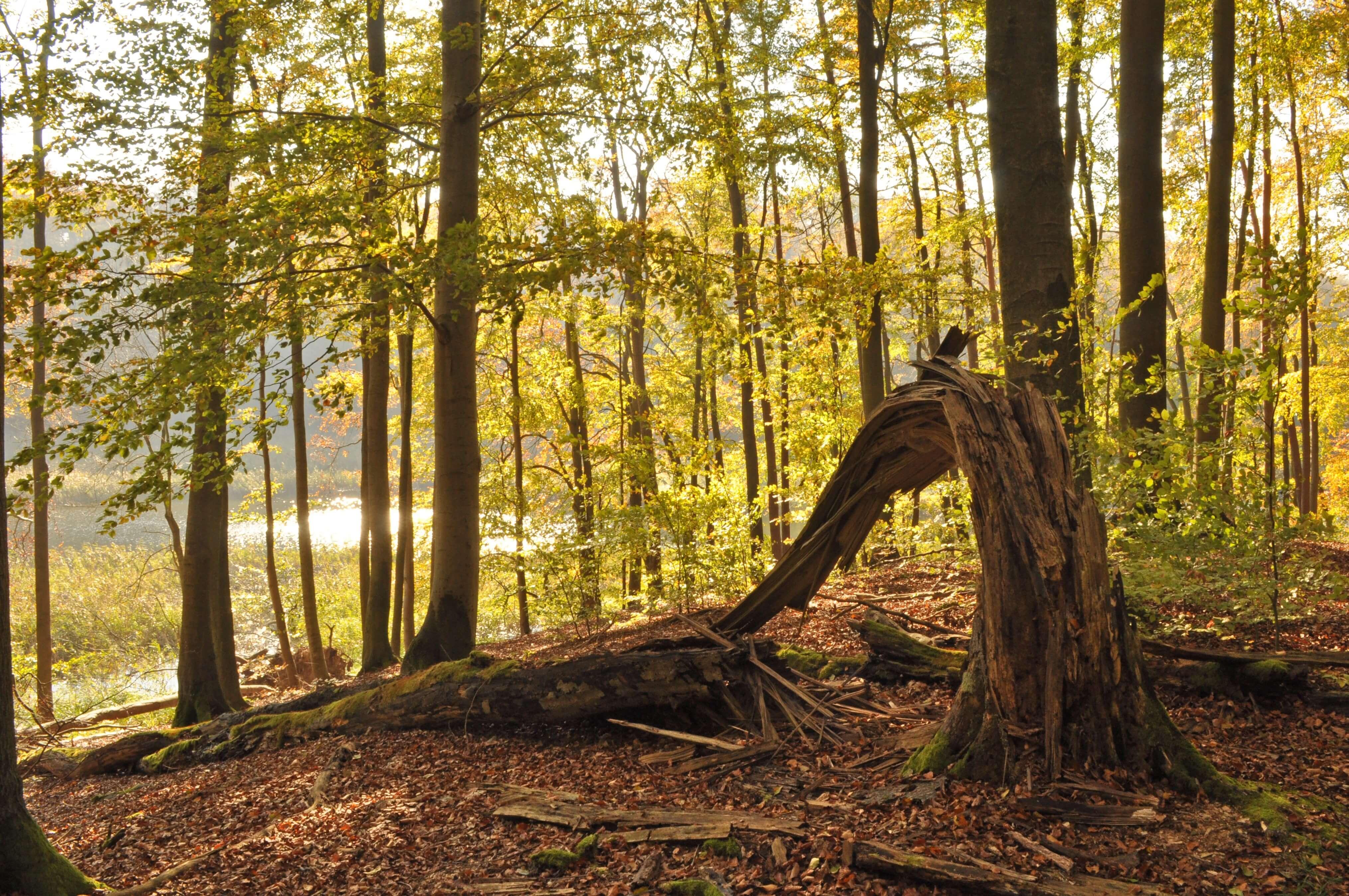 Nationalpark Müritz - Rundweg bei Herzwolde