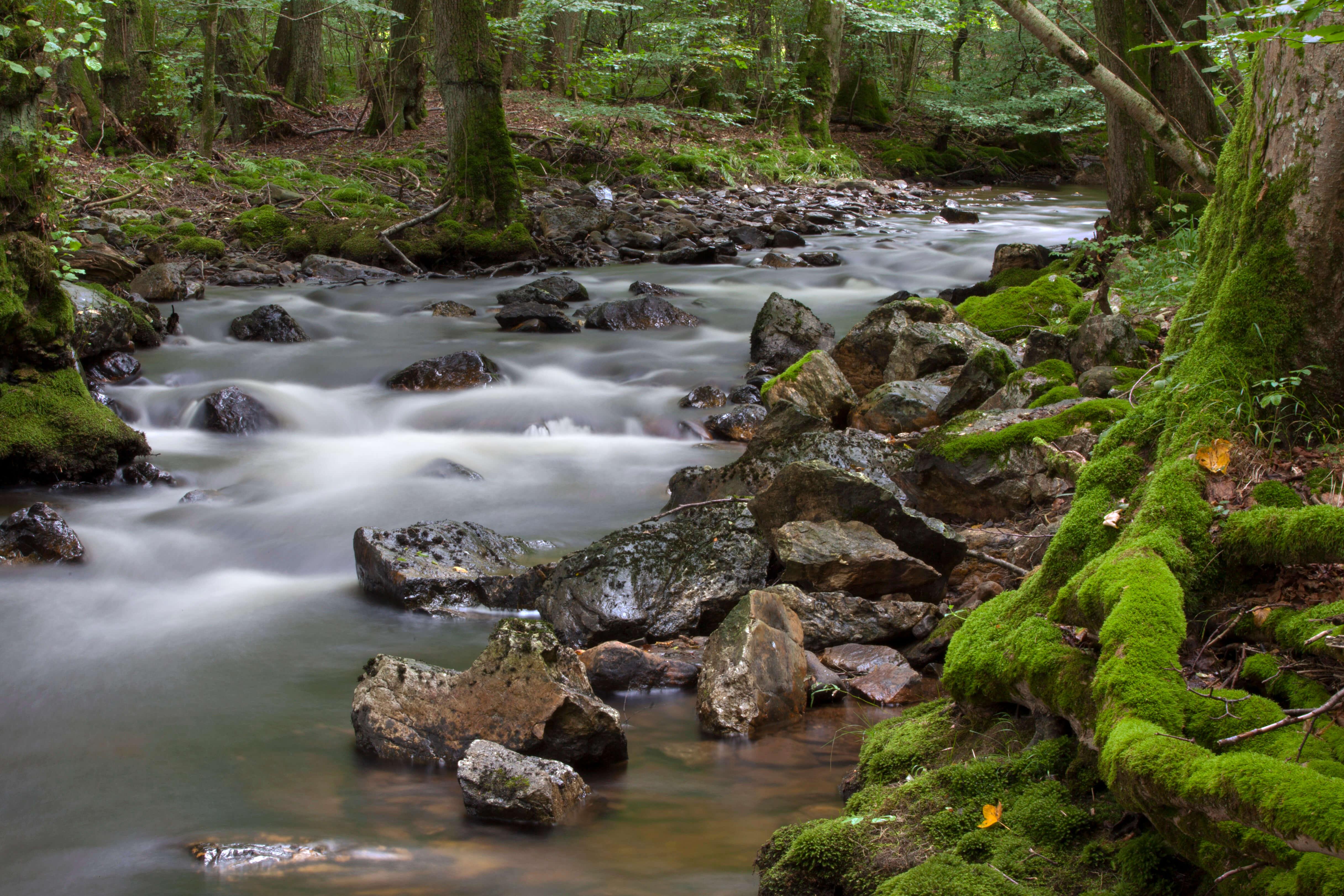 Nationalpark Hunsrück Hochwald - Sommerfrische an der Traun